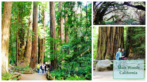 A collage of Muir woods Ca